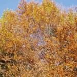 Letni čas – Jesen